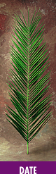 Date Leaf Palm palm, palm sunday, easter, ash, ash wednesday, lent, palm strips, decorative palm, date leaf, DLD