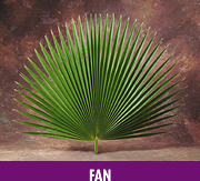Fan Leaf Palm palm, palm sunday, easter, ash, ash wednesday, lent, palm strips, decorative palm