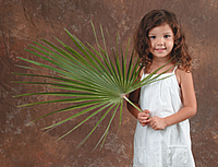 Processional Fan/ Mediterranean Leaf Palm palm, palm sunday, easter, ash, ash wednesday, lent, palm strips, decorative palm, processional, processional fan, PFL, Mediterranean